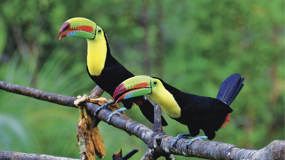 costa-rica-peroquet-toucan