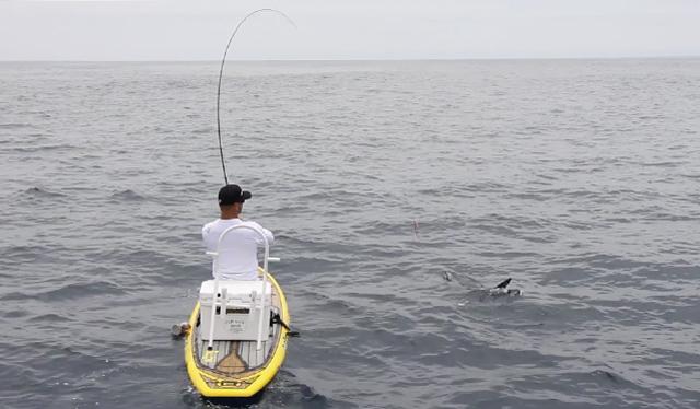 SUP-Fly-fishing-shark